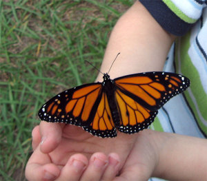 child_hand_buterfly